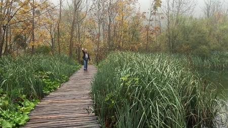 plitvice-geni-reeds