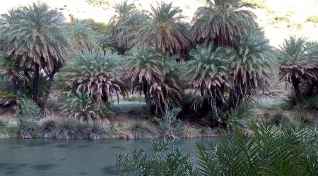 Palm trees on Limini River